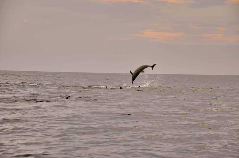 delfines excursion maldivas