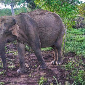 Día 5 Sri Lanka: Uda Walawe – playas del sur-  Ahangama
