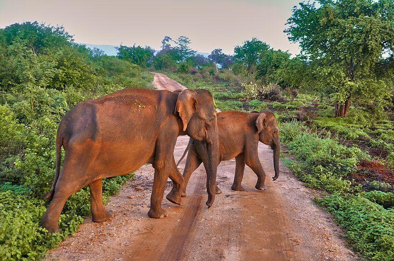 grupo elefantes uda walawe