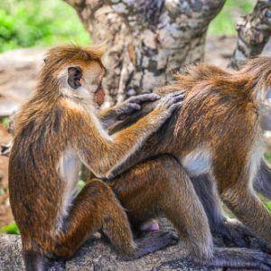 Día 1 Sri Lanka : Negombo – Anuradhapura – Mihintale