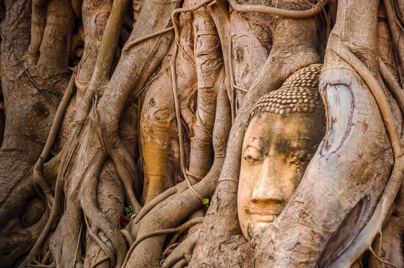 cabeza ayutthaya