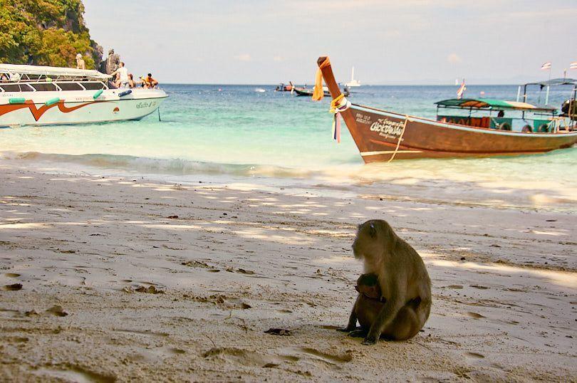 monos monkey beach