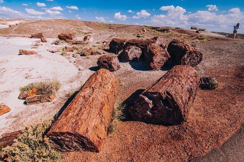 arboles petrificados Petrified Forest